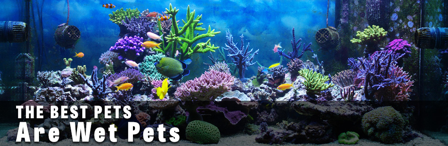 Tropical Fish Aquarium Store In Eldora Ia Hardin County